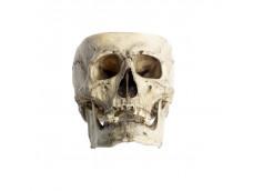 Капала (чаша из человеческого черепа).